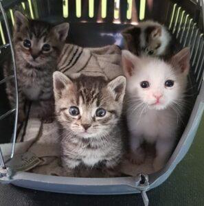 Adopcje 16